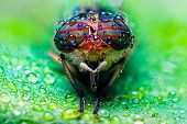 picture of raindrops  - Close Up View Of The Eyes A Tabanus Abdominalis Horsefly With Raindrops - JPG