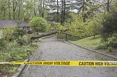 pic of tree lined street  - A large wet oak tree and electrical wires torn down by a Spring storm lie across a neighborhood street blocking passage behind yellow police caution tape warning of high voltage