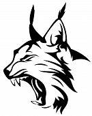 foto of wildcat  - wild lynx head mascot  - JPG