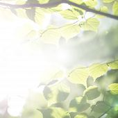 foto of ethereal  - Bright ethereal spring leaves background with a misty sun flare giving a faded vintage effect with copyspace - JPG