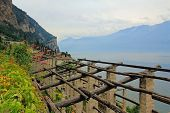 pic of horticulture  - Old weathered scaffolding for lemon horticulture italian limonaia - JPG