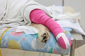 foto of vets surgery  - Pink bandage covering Golden retriever back leg after surgery - JPG