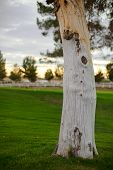 foto of driftwood fence  - A knotted tree stands alone in a grassy field during sunrise - JPG