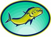 picture of mahi  - illustration of a dolphin fish or mahi mahi swimming viewed from a low angle - JPG