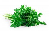 picture of chinese parsley  - Bunch of parsley on a white - JPG