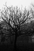 picture of dead plant  - Black and White of dead plant in winter - JPG