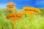 stock photo of thankful  - Three Labels With English Text Thank You And Thanks On Sunny Green Grass For Spring Or Summer Feeling And Blue Sky - JPG