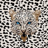 stock photo of cheetah  - Leopard pattern vector - JPG