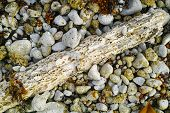 image of wood pieces  - A rotten piece of beach wood is surrounded by pebbles and sea weed - JPG