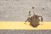 stock photo of feces  - Close up cow dung on the floor - JPG