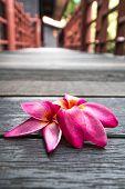 pic of plumeria flower  - beautiful pink plumeria flowers on wooden floor - JPG