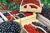 foto of crate  - Black And Red Currants Berries Harvest In The Wood Crate And Red Curant Bush In The Summer Garden Background - JPG