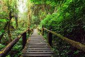 image of jungle  - Jungle landscape - JPG