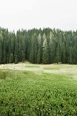 stock photo of ecosystem  - Healthy coniferous trees in forest of old spruce fir larch and pine trees in wilderness area with alpine pasture in the foreground - JPG