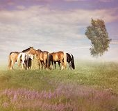 pic of horses eating  - Farm Horses Eating Hay At Sunset - JPG
