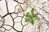 pic of mud  - Plant in dried cracked mud on summer day - JPG