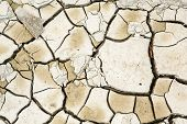 foto of mud  - Plant in dried cracked mud on summer day - JPG