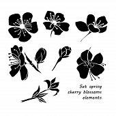 pic of black-cherry  - Set of black silhouette spring cherry blossom flowers - JPG