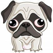 stock photo of pug  - Pug dog - JPG