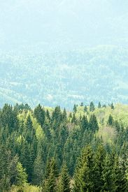 stock photo of ecosystem  - Healthy colorful coniferous and deciduous forest with old and big trees in desolate wilderness area of a national park - JPG