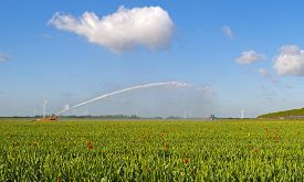 pic of cannon  - Water cannon irrigating a field with tulips in spring - JPG