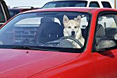 picture of parking lot  - dog behind the wheel in a parking lot waiting for it - JPG