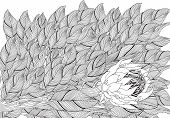 Coloring Book Page For Adult And Children. Protea Flower poster