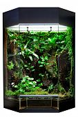 pic of rainforest animal  - terrarium or vivarium for keeping rainforest animal such as poison frog and lizards - JPG