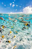 Colorful fish, stingray and black tipped sharks underwater in Bora Bora lagoon poster