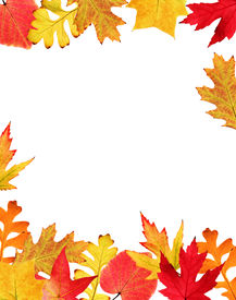 stock photo of fall leaves  - Frame made of colorful autumn leaves on white background - JPG