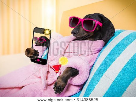 poster of Cool Funny  Sausage  Dachshund Dog Resting And Relaxing In   Spa Wellness Salon Center ,wearing A  P