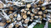 Cut Logs, Close-up. Sawn Birch Trunks poster