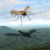 Mosquito Danger Fear And The Risk Of Mosquitoes In The Outdoors Transmitting Harmful Infections As M poster