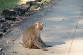 A Cute Furry Monkey Sits On The Stone Slabs Of An Ancient Building. poster