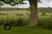 stock photo of tire swing  - An old tire swing with a beautiful Missouri landscape in the background - JPG
