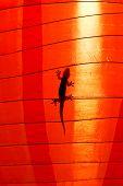 image of gekko  - A Gecko  - JPG