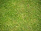 stock photo of football pitch  - green grass football pitch texture - JPG
