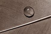 stock photo of teardrop  - Macro of water drop on feather detail pattern - JPG