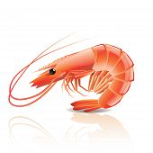 pic of tiger prawn  - Cooked shrimp isolated on white photo - JPG