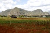 picture of tobacco barn  - Barn for drying tobacco in Cuban countryside in a little town of Vinales nestled among the mountains - JPG