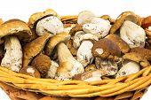 stock photo of porcini  - Porcini in basket penny bun in basket on white background - JPG