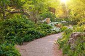 image of plant species  - Sunny Summer Garden - JPG