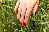 stock photo of fingernail  - finger with red fingernail in the meadow - JPG