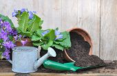 stock photo of planters  - flowers pot with little metal watering can and planter filled with soil - JPG
