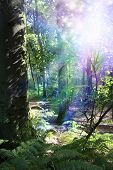 picture of fairies  - Scene of deep woodland with thick tree trunk on left - JPG