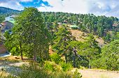 foto of coniferous forest  - The old coniferous forests covered the peaks of the Troodos mountains Cyprus - JPG
