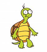 stock photo of terrapin turtle  - turtle cartoon smiling funny hand drawn character - JPG