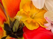 picture of stamen  - yellow pistil and stamen black bright red tulips and yellow daffodils in the spring bouquet - JPG