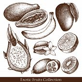 picture of pawpaw  - Vector collection of ink hand drawn exotic fruits sketch for kitchen and restaurant design - JPG