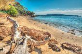 picture of driftwood  - white driftwood in Mugoni shoreline - JPG